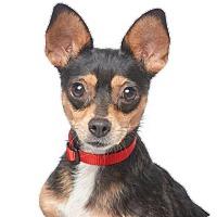 Adopt A Pet :: Wendy - Los Angeles, CA