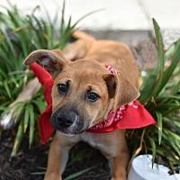 Adopt A Pet :: Astro - Frisco, TX