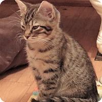 Adopt A Pet :: NoNo - Coldspring, TX