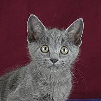 Adopt A Pet :: Lyle - Columbia, IL