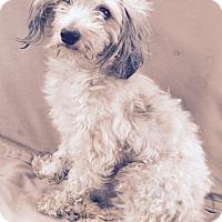 Adopt A Pet :: Terrence - Woonsocket, RI