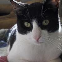 Adopt A Pet :: Hewey - Potsdam, NY