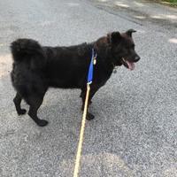Adopt A Pet :: Rachel - New Freedom, PA