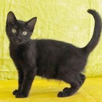 Adopt A Pet :: Eddard Stark - Bristol, IN