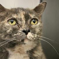 Adopt A Pet :: Snuggles - Hilton Head, SC