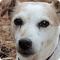 Adopt A Pet :: Darby - Thomasville, NC