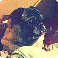 Adopt A Pet :: Duke - Eagle, ID