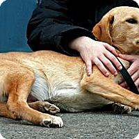 Adopt A Pet :: Skipper - Spring City, PA
