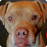Adopt A Pet :: Buster - Hadley, MI