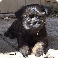 Adopt A Pet :: George-Pending Adoption - Omaha, NE