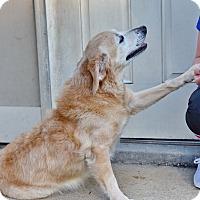 Adopt A Pet :: Tess - New Canaan, CT