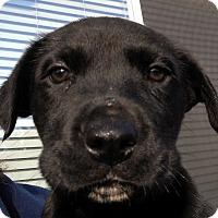 Adopt A Pet :: Baby Symphony - Oakley, CA
