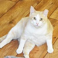 Adopt A Pet :: Abbott - Lincoln, NE
