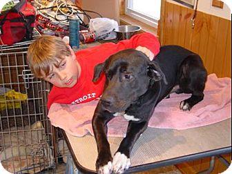 Labrador Retriever Mix Dog for adoption in Palatine/Kildeer/Buffalo Grove, Illinois - Hootie