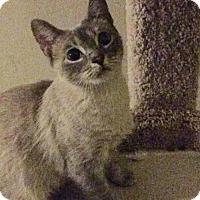 Adopt A Pet :: Scout - Royal Palm Beach, FL