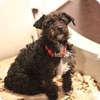 Adopt A Pet :: Ophelia - San Diego, CA