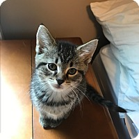 Adopt A Pet :: Alaska - Columbia, TN