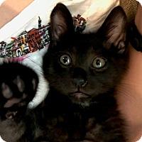 Adopt A Pet :: Gatsby - Houston, TX