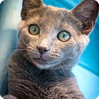 Adopt A Pet :: Neptune Man - Philadelphia, PA