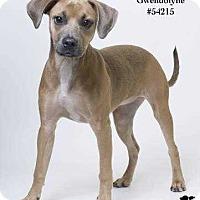 Adopt A Pet :: Gwendolyne - Baton Rouge, LA