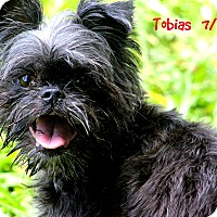 Adopt A Pet :: TOBIAS IN Dublin, GA. - Little Rock, AR