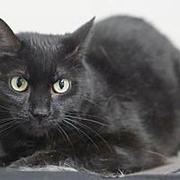 Adopt A Pet :: Cole - Rocky Mount, VA