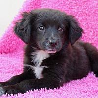 Adopt A Pet :: Martha - Los Angeles, CA