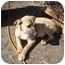 Photo 1 - German Shepherd Dog/Shepherd (Unknown Type) Mix Dog for adoption in Los Angeles, California - Angel's needing to be saved