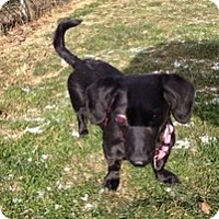 Adopt A Pet :: Taffy - Madison, WI