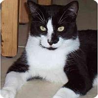 Adopt A Pet :: Tux - Fort Lauderdale, FL