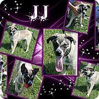 Adopt A Pet :: Jay - Lancaster, OH