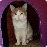 Adopt A Pet :: Bud (Crimson) - Lawrenceville, GA