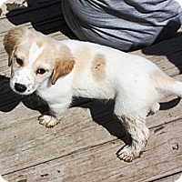 Adopt A Pet :: Evan - PENDING, in Maine - kennebunkport, ME