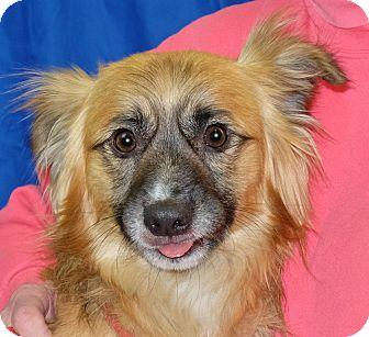 Terrier (Unknown Type, Small) Mix Dog for adoption in Spokane, Washington - Pumpkin