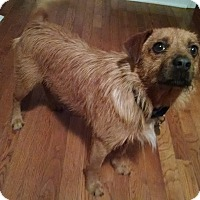 Adopt A Pet :: Cannon - Richmond, VA