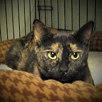 Adopt A Pet :: Lana - Reeds Spring, MO
