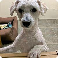 Adopt A Pet :: Murphy - Tavares, FL