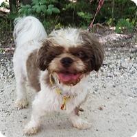 Adopt A Pet :: Simba - Jackson, MO