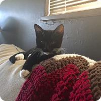 Adopt A Pet :: Turnip - Columbus, OH