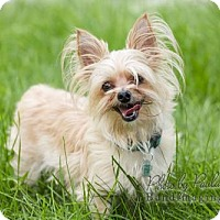 Adopt A Pet :: Scrappy - Courtice, ON