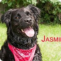 Adopt A Pet :: Jasmine - Hamilton, MT