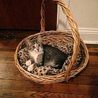 Adopt A Pet :: Wolf - Brooklyn, NY