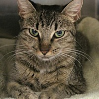Adopt A Pet :: Mona - Hilton Head, SC