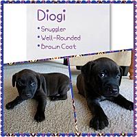 Adopt A Pet :: Diogi - Oviedo, FL
