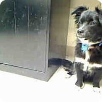 Adopt A Pet :: Pumpkin - Antioch, IL