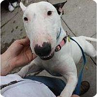Adopt A Pet :: Karma - Arlington, TX