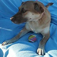 Adopt A Pet :: Mamma - Phoenix, AZ