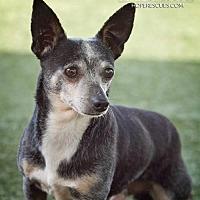 Adopt A Pet :: Poncho - Godfrey, IL