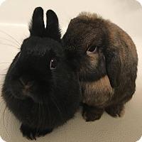 Adopt A Pet :: Fang & Charlie - Watauga, TX