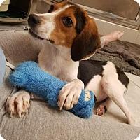 Adopt A Pet :: Trixie AKA Baby - Tampa, FL